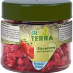 Terra Freeze Dried Strawberry Erdbeere
